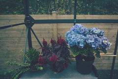 Flower pots in a greenhouse Royalty Free Stock Photos