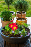 Flower pots with herbs and flowers Royalty Free Stock Images