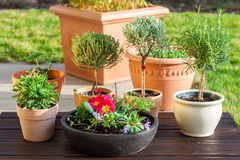 Flower pots with herbs and flowers Stock Photo