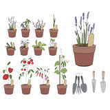 Flower pots with herbs and vegetables. Gardening Stock Photo