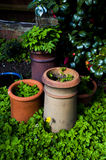 Flower pots high contrast Royalty Free Stock Photography
