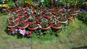 Flower pots kept for sale Royalty Free Stock Image
