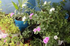 Flower pots and leaves Stock Photo