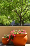 Flower-pots in Los Angeles. Flowers-pots and trees in downtown in Los Angeles Royalty Free Stock Image