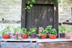 Flower pots in an old backyard, Tryavna Royalty Free Stock Photos