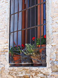 Flower Pots in Old Window Royalty Free Stock Image