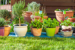 Flower pots Royalty Free Stock Image