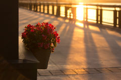 Flower Pots Outdoor Stock Image
