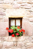 Flower pots with red geraniums. Window with wooden frame and lace curtains with pot of red flowers on the sill in stone wall Royalty Free Stock Image