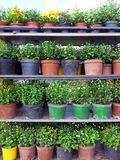 Flower pots for sale Royalty Free Stock Photos