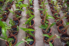 Flower pots with seedlings Stock Photos