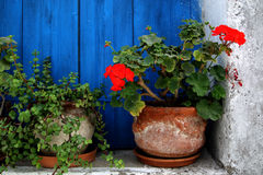 Flower pots. On the sill of a blue wooden window Royalty Free Stock Photography
