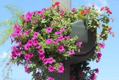 Flower pots on sky background Stock Photography