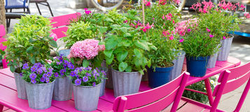 Flower pots in spring Royalty Free Stock Image