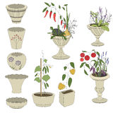 Flower pots with vegetables - herbs,pepper Stock Photo
