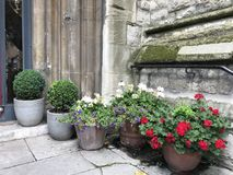 Flower pots by wall Royalty Free Stock Photography