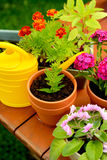 Flower pots and watering pot in green garden royalty free stock photos