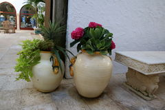 2 Flower Pots. These 2 flower pots were in a shopping plaza in Palm Beach, FL. The setting was serene next to a bench in the plaza Royalty Free Stock Photos