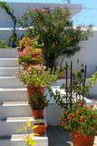 Flower pots on whitewashed steps Stock Image