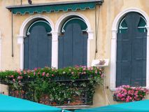 Flower Pots on Window Balcony, Venice,  Italy Royalty Free Stock Image