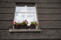 Flower pots at window sill Stock Photography