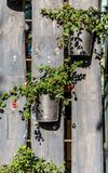 Flower pots on a wooden fence, flower decoration, wooden board Royalty Free Stock Photos