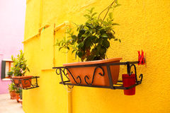 Flower pots in the yellow wall Royalty Free Stock Image
