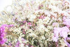 Flower potted vintage style stock photography
