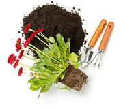 Flower potting, dirt and gardening tools Stock Image