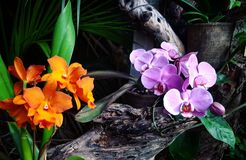 Flower power Royaltyfri Fotografi