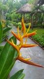 Flower power photos libres de droits