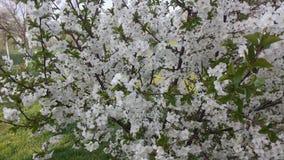 Flower power Imagen de archivo