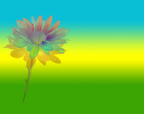 Flower Power. Psychedelic daisy on bright rainbow background royalty free illustration