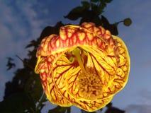 Flower power Fotografia Stock Libera da Diritti