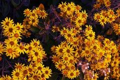 Flower power Lizenzfreie Stockfotos