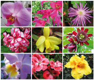 Flower power. Colofull composition of different kind of flowers Stock Images