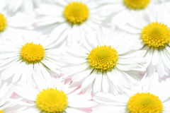 Flower power Royalty Free Stock Images