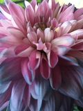 Flower power Imagenes de archivo