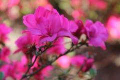 Flower power Fotografering för Bildbyråer