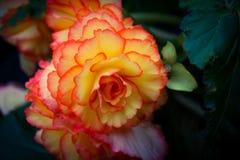 Flower power Royaltyfri Bild