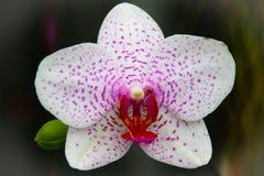 Flower power Arkivfoton