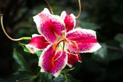 Flower power Royaltyfria Bilder
