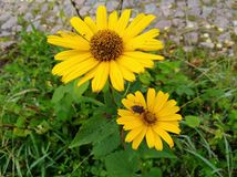 Flower power Royaltyfria Foton