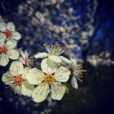 Flower power, Berlín, Alemania Imagen de archivo libre de regalías