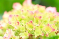 Flower power Stock Photos