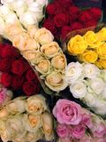 Flower power. Pile of beautiful flowers, roses, of red, pink, yellow, orange, white color, dozens of flowers of different color, flower show, florist industry Stock Images