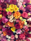 Flower power. Pile of beautiful flowers, roses, of red, pink, yellow, orange, white, coral color, dozens of flowers of different color, flower show, florist Royalty Free Stock Image