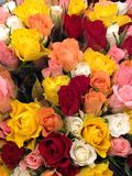 Flower power. Pile of beautiful flowers, roses, of red, yellow, coral,white creamy color, cream-colored, whity-pink, pale pink, rose dozens of flowers of Royalty Free Stock Photography