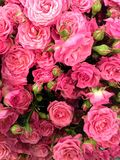 Flower power. Pile of beautiful flowers, roses, of rose color, dozens of flowers of different colour, flower show, florist industry, pack of Stock Images