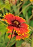 Flower Power Stock Photo